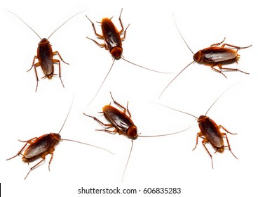 set of cockroach on white background