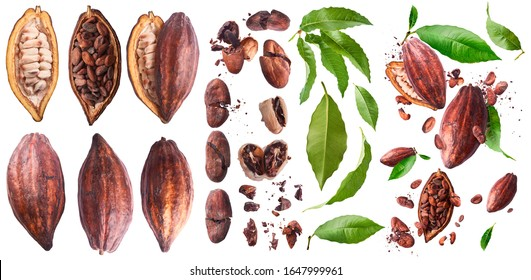 Set with A lot of cocoa pod and beans, cracked and whole isolated on a white background