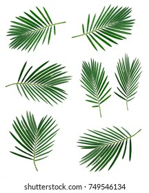 Set of coconut leaf on white backgrounds. Tropical leaves.