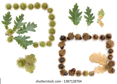 set collection of Turkey oak (Quercus cerris) fruits and leaves isolated on a white background.