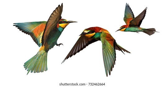 set of color birds in flight isolated on a white background