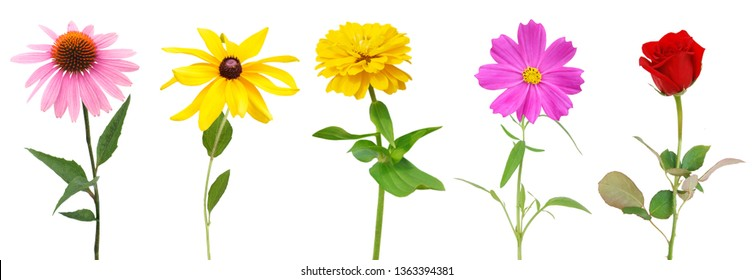 set of colorfull flower branches isolated white
