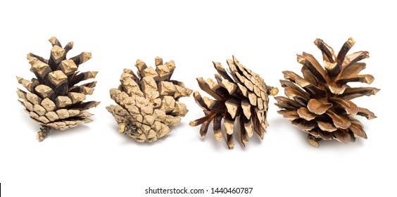 Set of cones of various coniferous trees on a white background.
