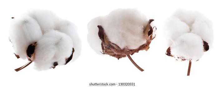 Set of cotton plants on white