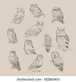 A set of a cute different species of owls.