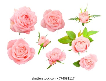 Set of delicate pink roses, bows and leaves isolated on white background.
