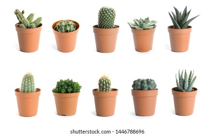 Set of different cactuses on white background