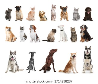 Set of different pets on white background