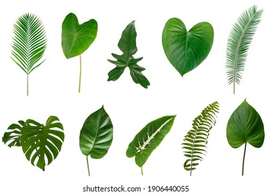 Set of Different Tropical leaves isolated on white background.