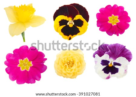 Set different types spring flowers isolated stock photo edit now set of different types of spring flowers isolated on white background mightylinksfo