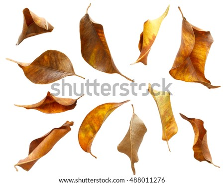 set of dry autumn leaves isolated on white background