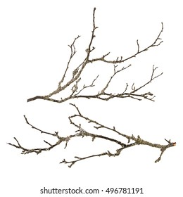 Set dry tree branch with lichen isolated