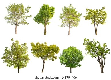 set of eight green trees isolated on white background
