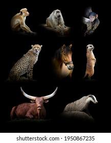 Set of eight wildlife animal isolated on black background