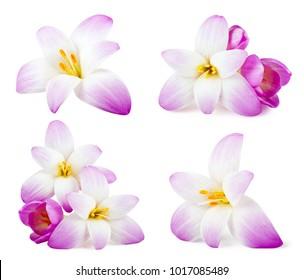 Set of elegance flowers isolated on white background.