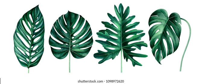 Set of exotic tropical leaves isolated on white background. Watercolor hand drawn illustration.
