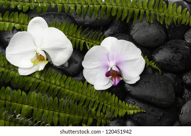 set of fern and white two orchid on pebbles background