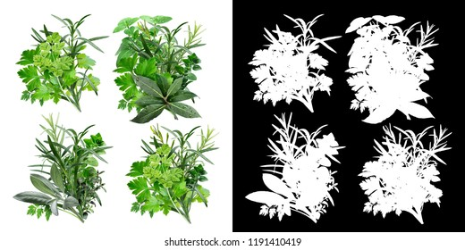 Set of fine herbs (Fines Herbes, Herbes de Provence). Clipping paths, infinite depth of field