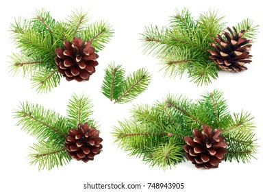 Set of fir tree branches with cone isolated on white background.