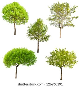 set of five green trees isolated on white background
