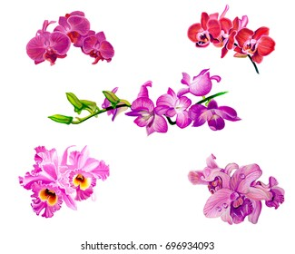 set of Flower paint orchids bouquet hand paint by poster color