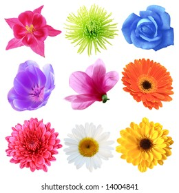 Set of flowers in different shapes, color