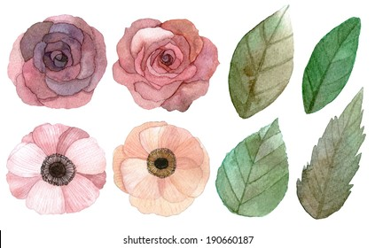 Set of flowers and leaves traditional drawing and painting by water-color on white background