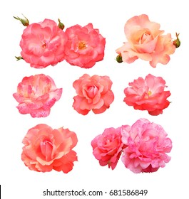 Coral flower background images stock photos vectors shutterstock set of flowers of pink coral roses isolated on white background with clipping path mightylinksfo