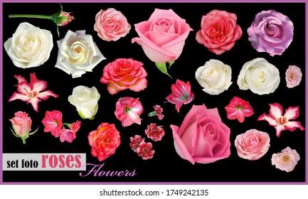 set flowers roses isolated on black background