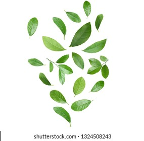 Set of flying green citrus leaves on white background