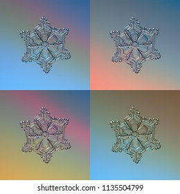 Set with four color variants of real snowflake, glittering on smooth gradient background: small snow crystal of star plate type with fine hexagonal symmetry, short arms  and glossy relief surface.