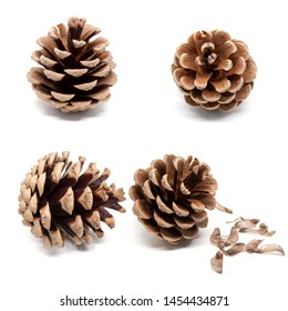 Set of four dry brown pine cones with shadow isolated on white background