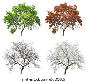 set of four seasons tree isolated on white background