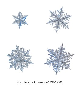 Set with four snowflakes isolated on white background. Macro photo of real snow crystals: stellar dendrites with fine hexagonal symmetry, long elegant arms, glossy surface and complex, ornate shapes.