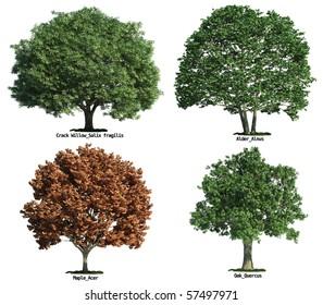 Imágenes, fotos de stock y vectores sobre Alder-tree | Shutterstock