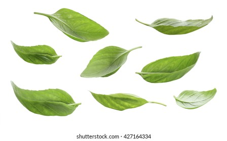 Set of fresh basil leaves isolated on white