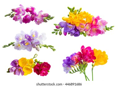 Set of fresh freesia clorful flowers with buds isolated on white background