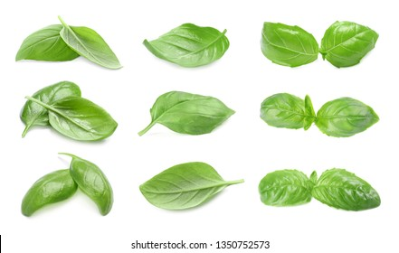 Set of fresh green basil leaves on white background
