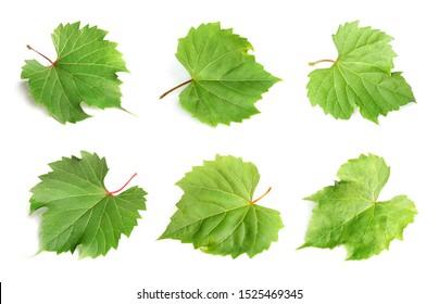 Set of fresh green grape leaves on white background