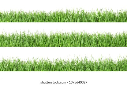 Set of fresh green grass on white background