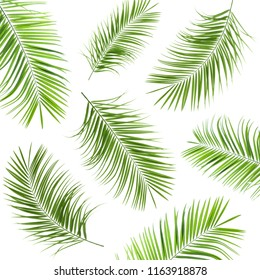 Set with fresh green palm leaves on white background