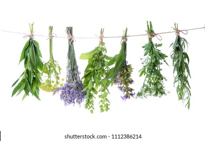 Set of fresh herbs hanging  on an isolated white background