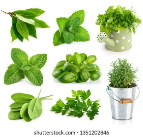 Set fresh herbs and spices. Still life greens with bed, isolated on white background.