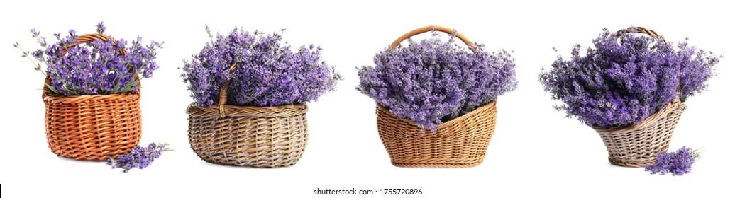Set of fresh lavender flowers in wicker baskets on white background. Banner design