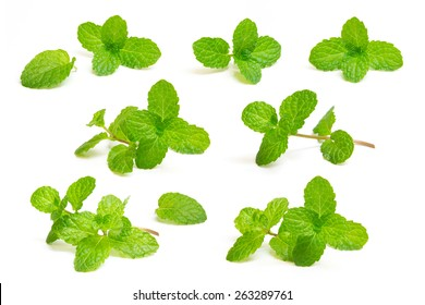 Set fresh mint isolated on white background