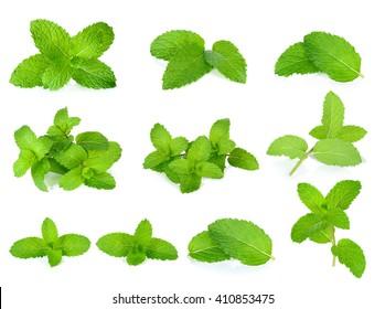 Set Fresh mint isolated on the white background.