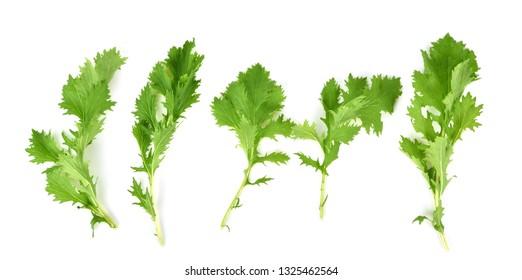 Set fresh mizuna vegetable isolated on white background