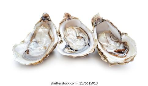 set of fresh opened oysters isolated on white background