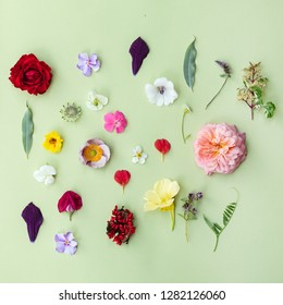 set of fresh summer flowers on the green background