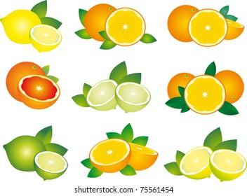 Set of fruit. Citrus. Illustration on white background